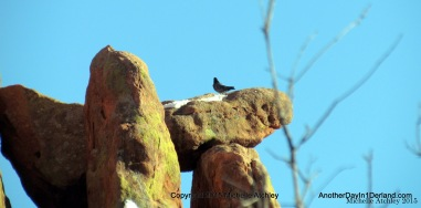 Bird on a Balanced Rock