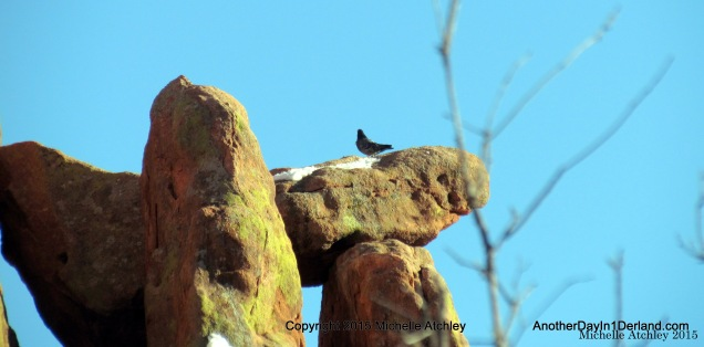 Bird on a Balanced Rock
