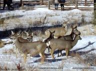 Herd of Deer