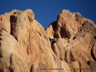 Bird In The Rocks