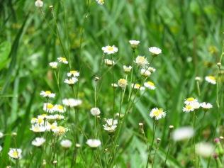 Pretty weeds