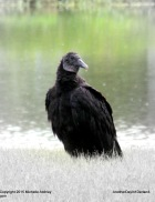 Alpha Bird