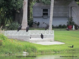 Garden Vultures