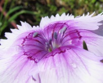 Purple & White Flower