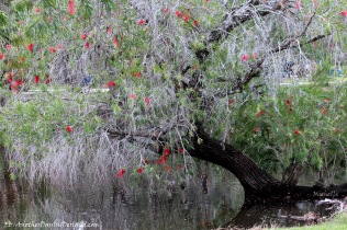 Enchanting Bottle Brush Tree