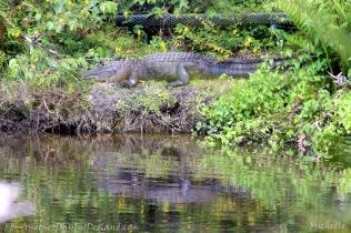 Big Boy Gator