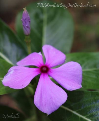 Purple Flower & Baby Bud