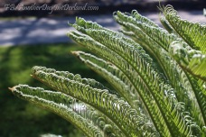 Unfurling Fronds